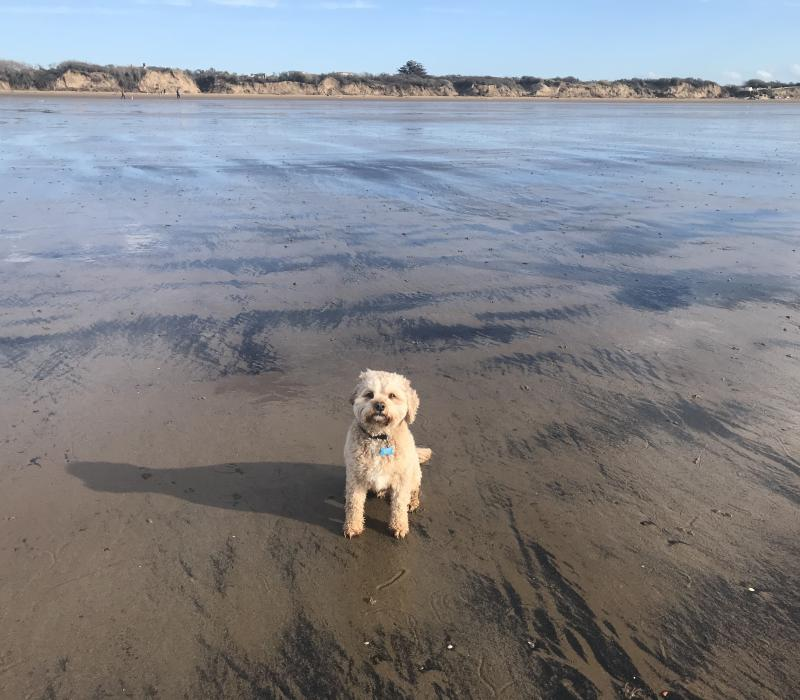 Staying Safe-lessons from a canine friend